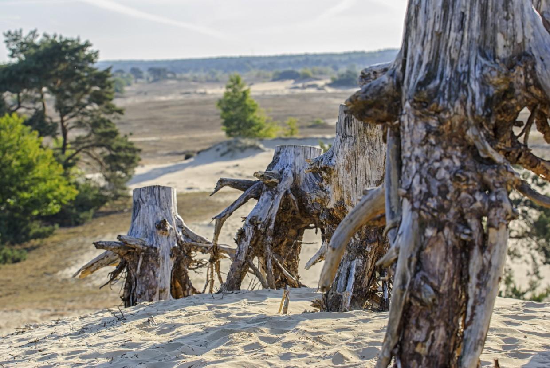 tree trunk in a sandy  desert landscape